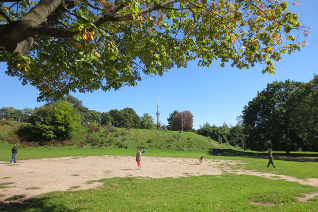 leash-off-area-trinity-bellwoods