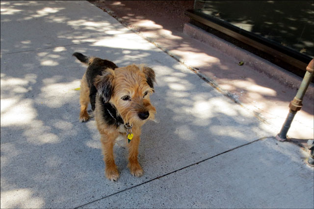 small-dog-in-cobourg