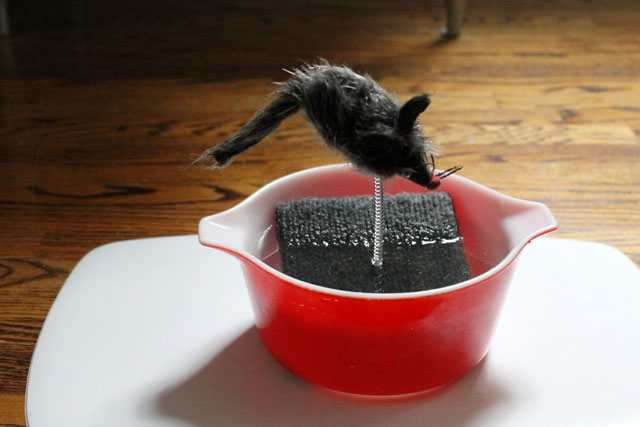 toy-mouse-in-cat-water-bowl