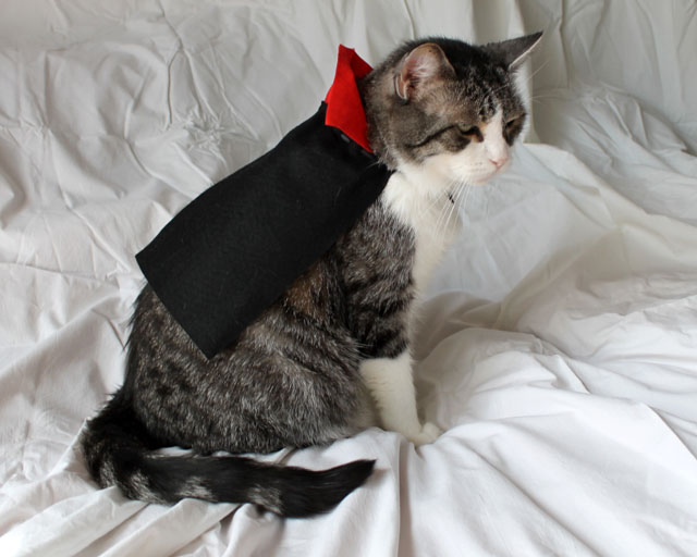 cat-in-a-cape