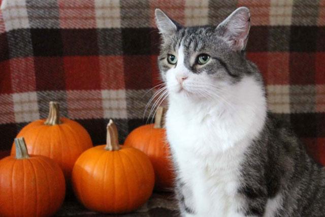 ed-with-pumpkins-cat
