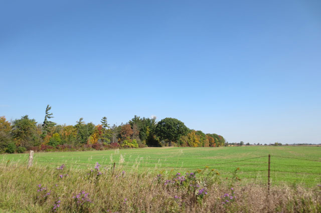 field-west-of-toronto
