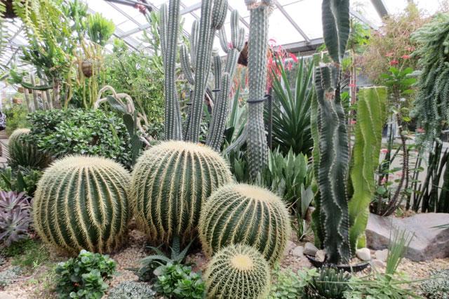 huge-cactci-allan-gardens