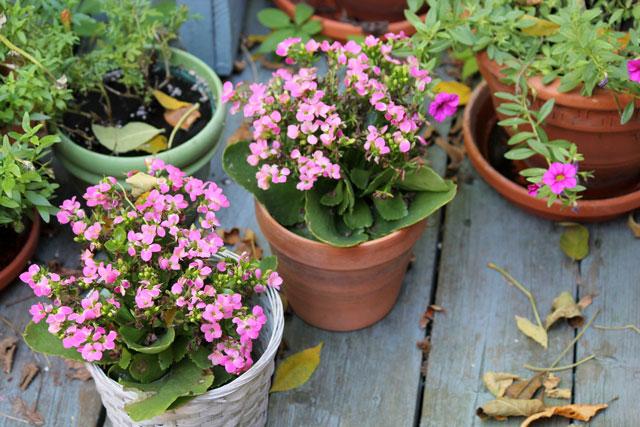 last-of-summer-flowers