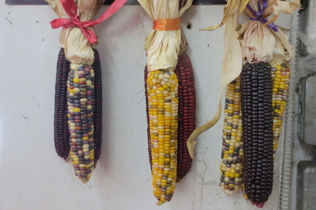 coloured-corn-kensington-market