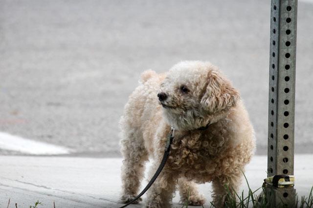 cute-dog-02