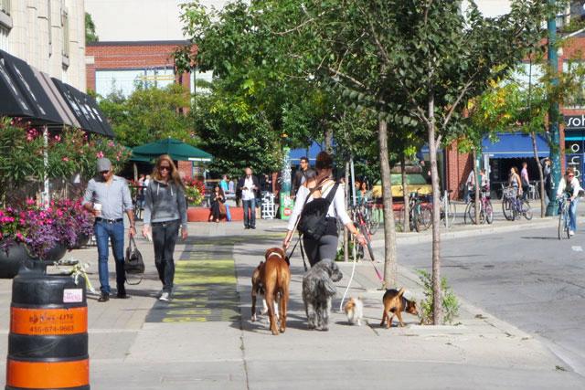 dog-walker-five-dogs