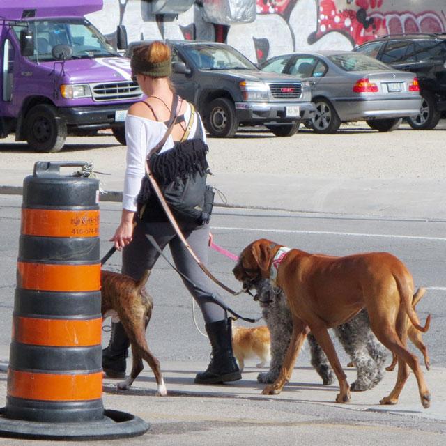 dog-walker-toronto