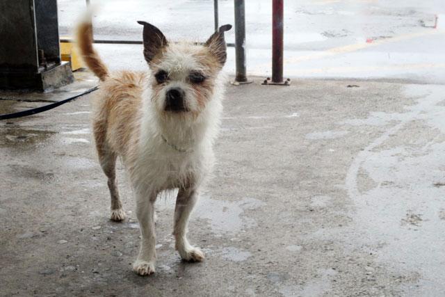 dog-waiting-value-village