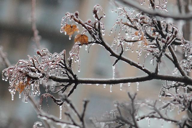 ice-storm-branches-toronto