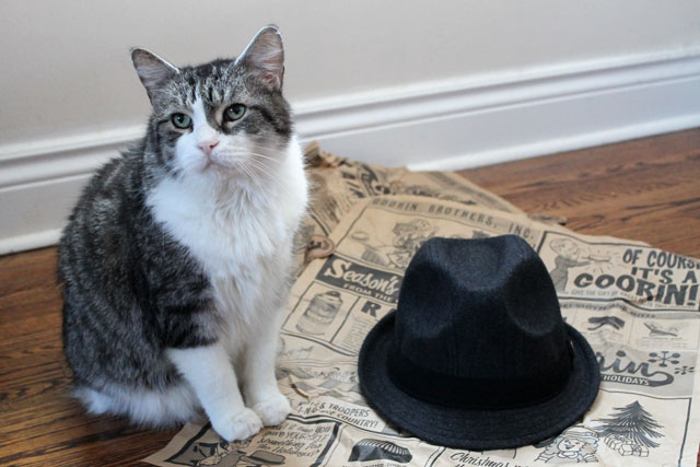 cat-and-a-hat