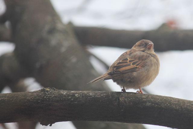 sparrow-03