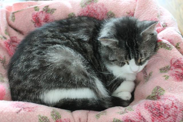 ed-pink-blanket