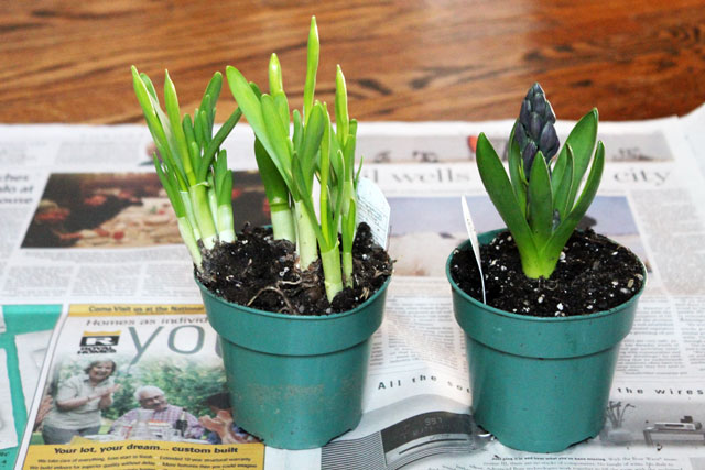 bulbs-for-indoor-display