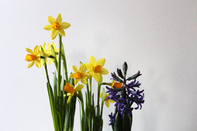 bulbs-for-indoors-day-5