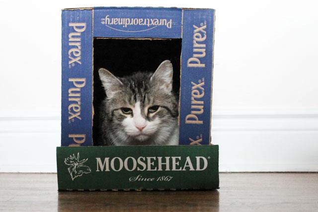 cat-in-box-house-2