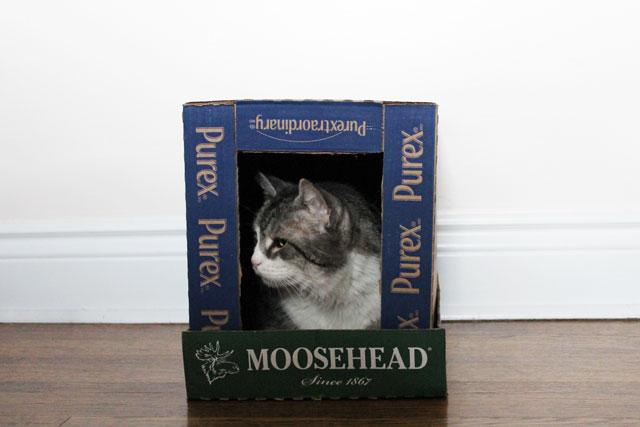cat-in-box-house