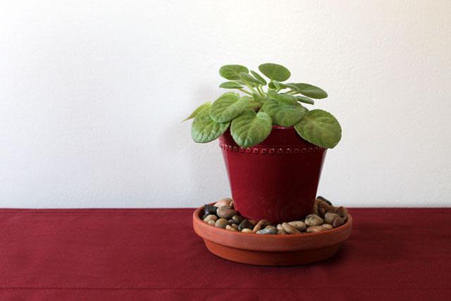 potted-plant-centerpiece-diy