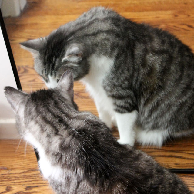 cat-in-a-mirror-6