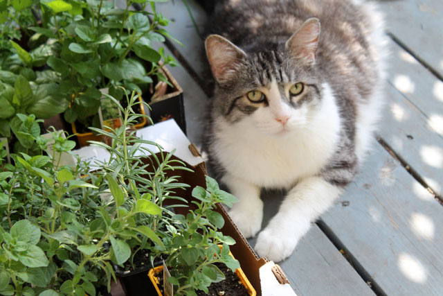 eddie-and-the-herb-plants