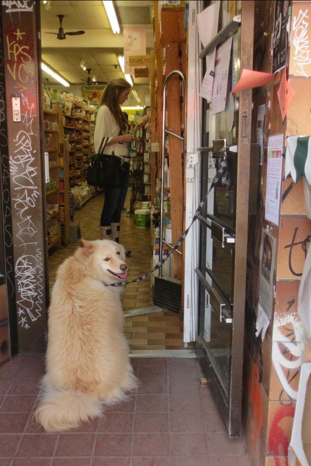 good-dog-kensington