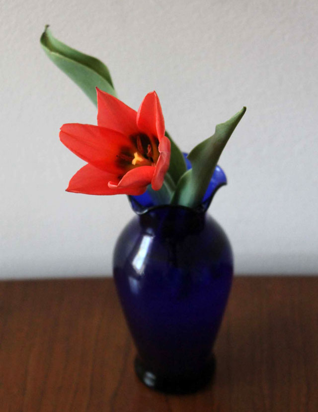 tulip-in-thrifted-blue-glass-vase