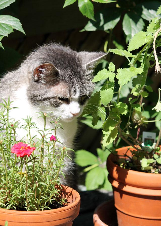 eddie-cat-with-catnip-plant