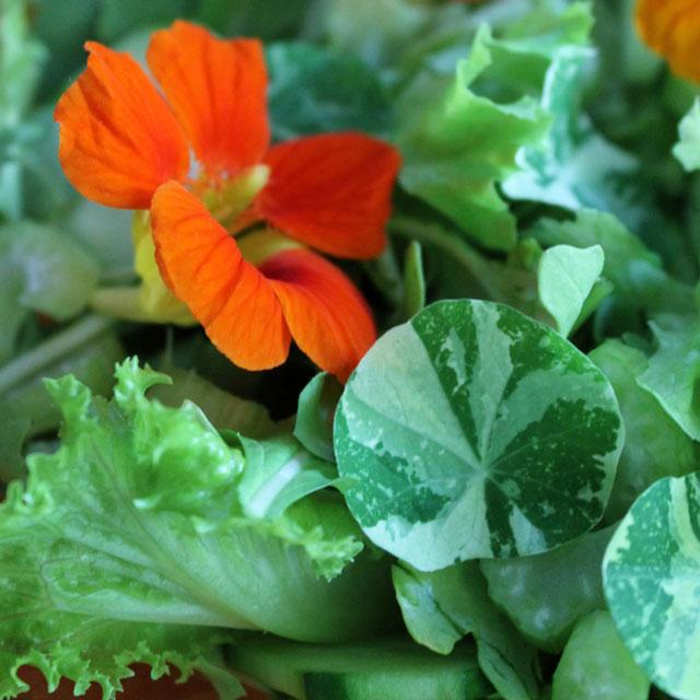 salad-with-flowers-in-it-nasturtiums-02