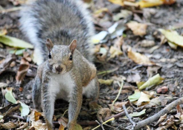 squirrel-friend-05