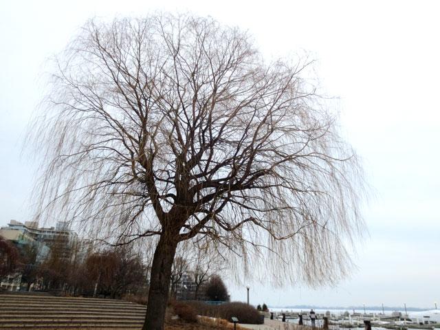 willow-on-toronto-waterfront-winter