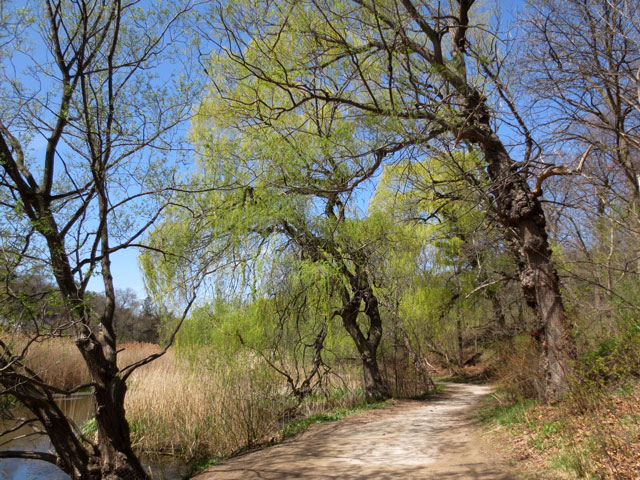 path-beside-grenadier-pond-high-park-toronto