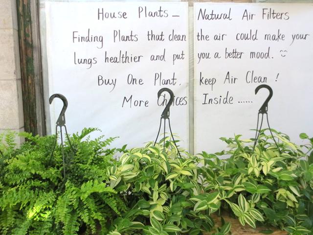 plant-shop-on-roncesvalles-ave