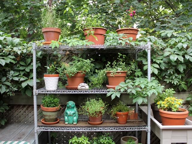 outdoor-potted-plant-garden-on-vintage-shelf