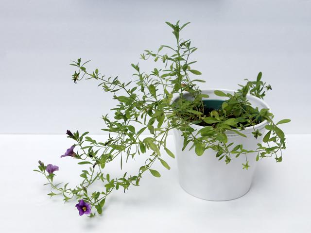 thrift-store-ceramic-plant-pot