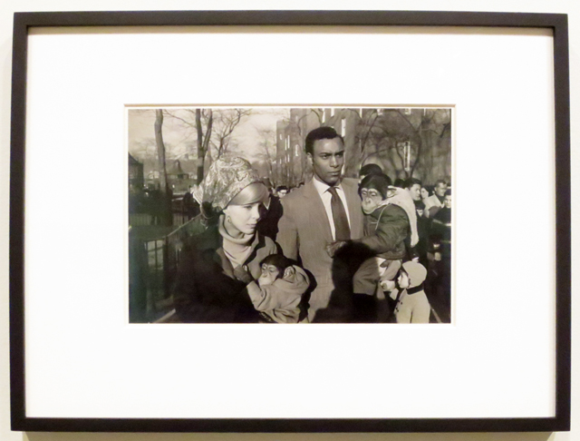 garry-winogrand-photograph-central-park-zoo-displayed-at-ago-outsiders-exhibit-toronto