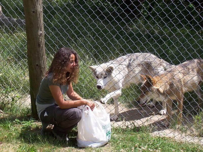 loups-gevaudan-4-3