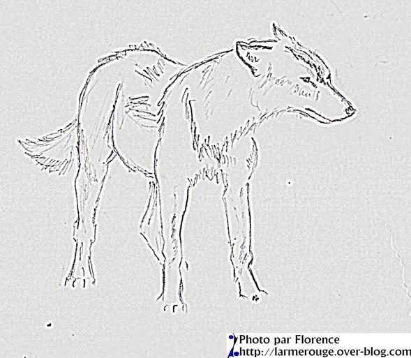 Dessin de loup (20) - Site officiel de l'association Le Klan du Loup