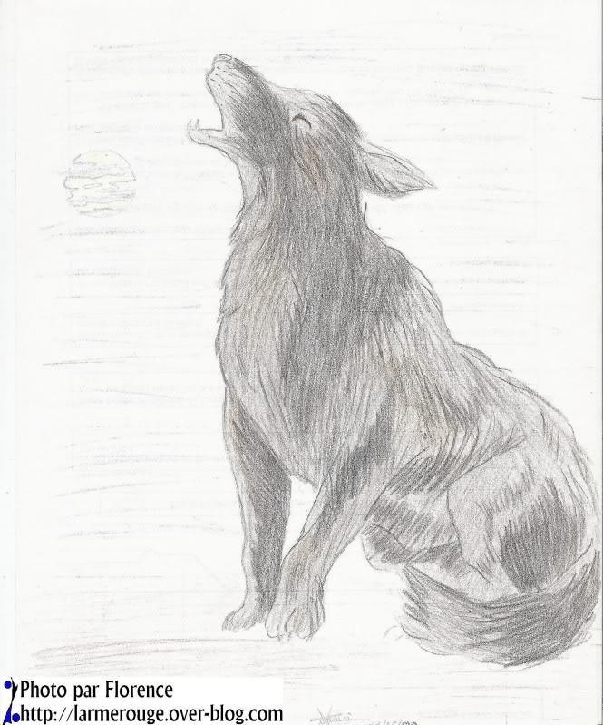 dessin-loup-20