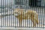 loup-zoo