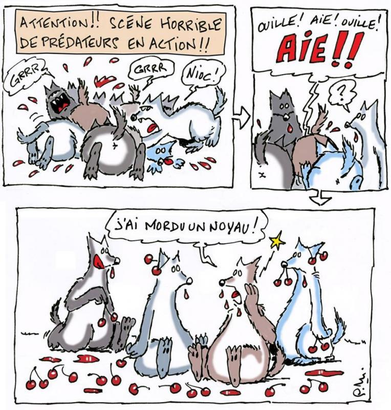 loups-coupables-carnage-humour