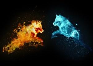 loup-lumiere-feu