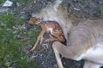 chasse-biodiversite