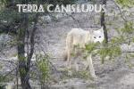 louve-quebec-canada