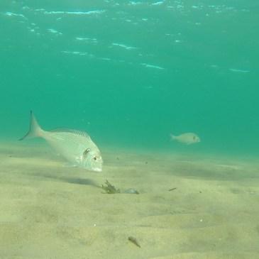 Pêche au crabe, expérience unique en mer