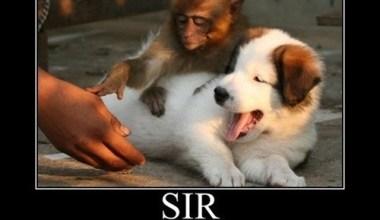 Sir, No Touching Dog Please