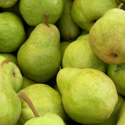 Get a 40 lb box of Pears for only $0.70/lb ($28) HOT DEAL!