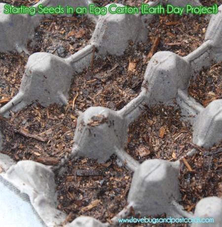 Egg Carton Seed Starters
