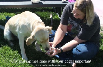 Why sharing mealtime with your dog is important