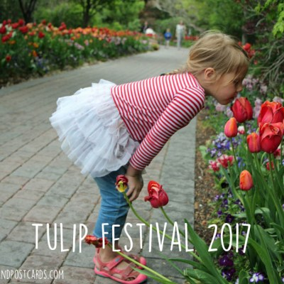 Tulip Festival at Thanksgiving Point 2017