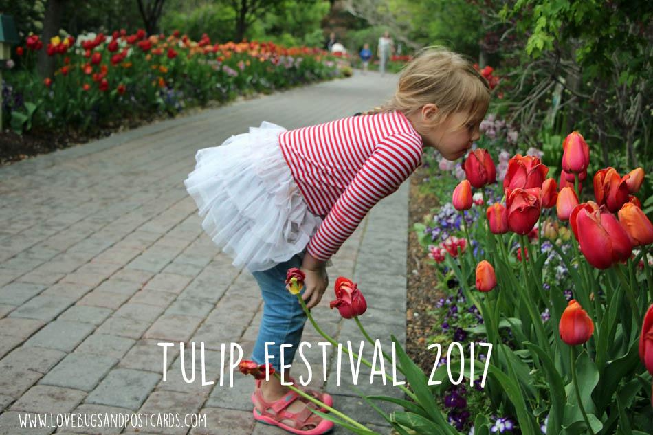 Tulip Festival at Thanksgiving Point 2017